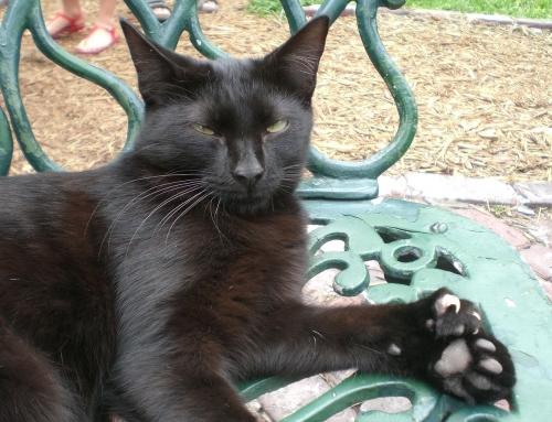 כנסו, יש פה חתולונים עם מלא אצבעות!